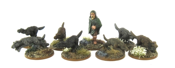 SAGA Irish - Dogs